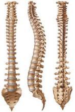 Магнітно-резонансна томографія. МРТ хребта - ціна в Харкові, Херсоні, Черкасах